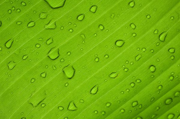 cover image to show eco friendliness of azek and timbertech composite decking materials - image of water droplets on a green leaf