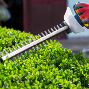 Trimming hedges near your deck